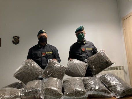 CAMPANIA – DROGA: SEQUESTRATA COLTIVAZIONE MARIJUANA DA GDF